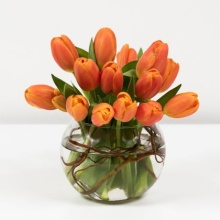 Enticing Tulips